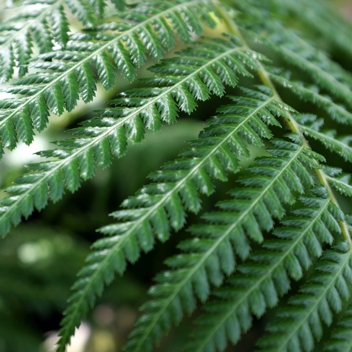 A fern front.